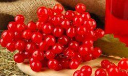 Калина: полезные свойства ипротивопоказания, применение ягод внародной медицине