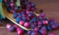 Ягода ирга: полезные свойства и противопоказания, как заготовить и что можно приготовить с лечебной целью