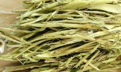 Кора осины: от чего помогает, от каких болезней применяют, польза и вред