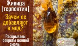 Мед с живицей: азбука здоровья