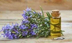 Эфирное масло розмарина: свойства и применение для волос и лица, от прыщей