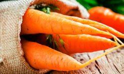 Морковь: польза и вред сырой и вареной, отзывы и рецепты