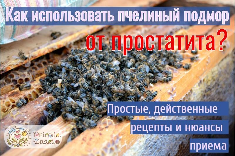 Отвар из подмора пчел при простатите может ли от простатита болеть яичко