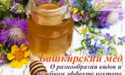 Башкирский мед: продукт, проверенный временем