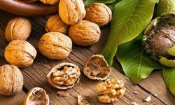 Перегородки грецкого ореха: лечебные свойства при женских и мужских болезнях, рецепты настоек и отваров