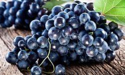 Виноград: польза и вред, калорийность ягод, применение косточек и листьев, правила выбора и заготовки + отзывы