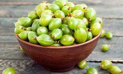 Крыжовник: полезные свойства и противопоказания листьев и ягод, применение в народной медицине
