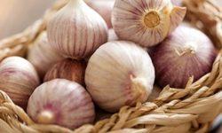 Чеснок: польза ивред для здоровья, рецепты отглистов, простуды, грибка, простатита + отзывы