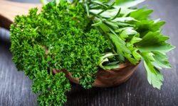 Петрушка: лечебные свойства ипротивопоказания, польза ивред, рецепты