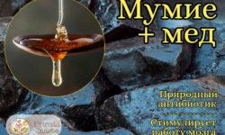 Мед с мумие – характеристики и показания к применению