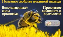 Пыльца пчелиная: полезные свойства и рекомендации
