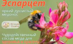 Эспарцетовый мед – чудесный дар природы