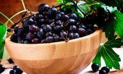 Листья смородины: полезные свойства и противопоказания, как сушить, рецепты отвара и настоя